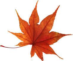 autumn leaf 1.jpg